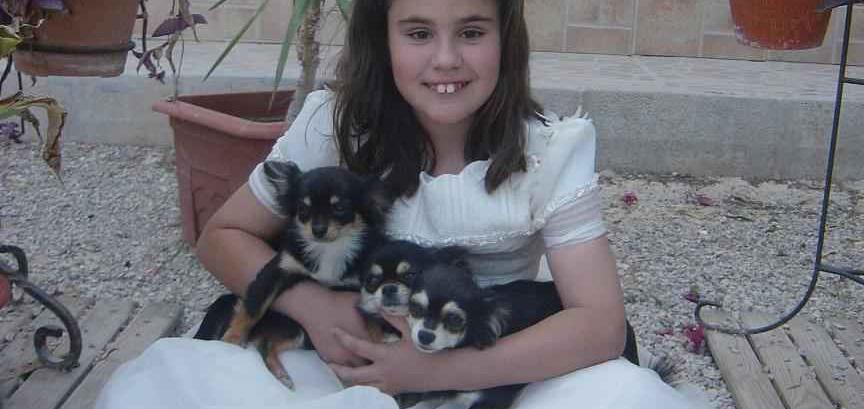 Comunión de Esther con Chihuahuas de Pelo Largo