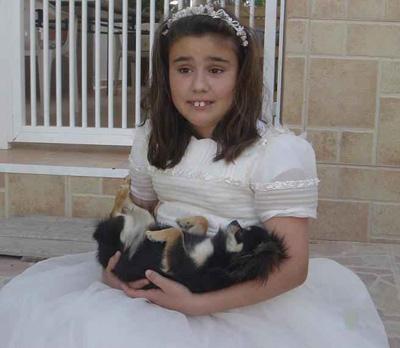 Comunión de Esther y los Chihuahuas de pelo largo