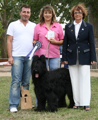 Perro participante en la Monográfica Española del Pastor de Brie