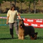 Dandy de Dasilva, perro de raza Pastor de Brie