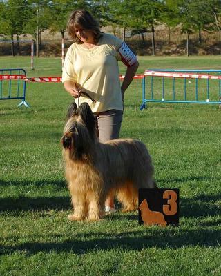 Raflecky de Dasilva, perro de raza Pastor de Brie