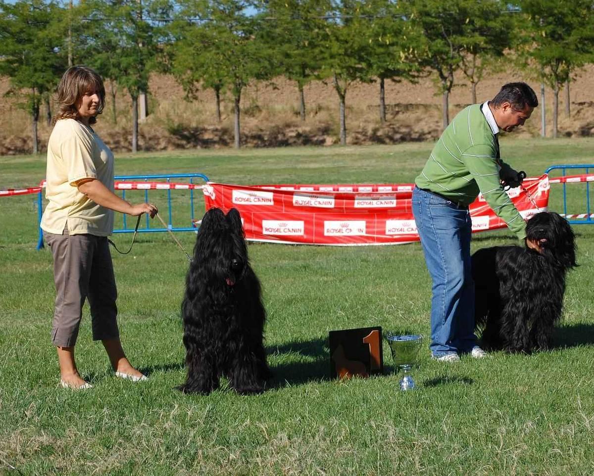Zumbo de Dasilva, perro de raza Pastor de Brie