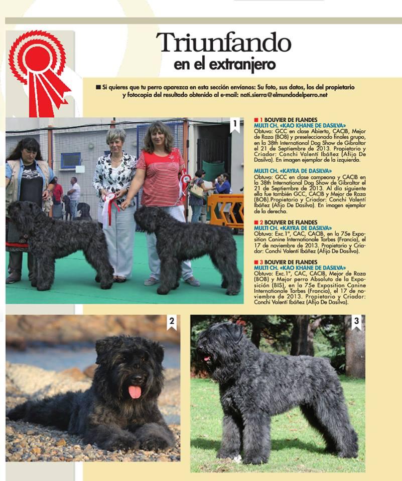 Revista el Mundo de Perro, triunfando en el Extranjero, Perros Dasilva. Pastor de Brie, Chihuhua de pelo largo, Bouvier des Flandres