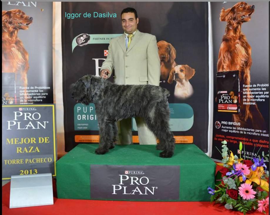 Iggor de Dasilva ganador de l Clase Cachorros en la Exposicion Canina de Murcia