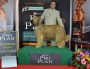 Yazum de Dasilva ganadora en Torrepacheco Murcia el Sabado