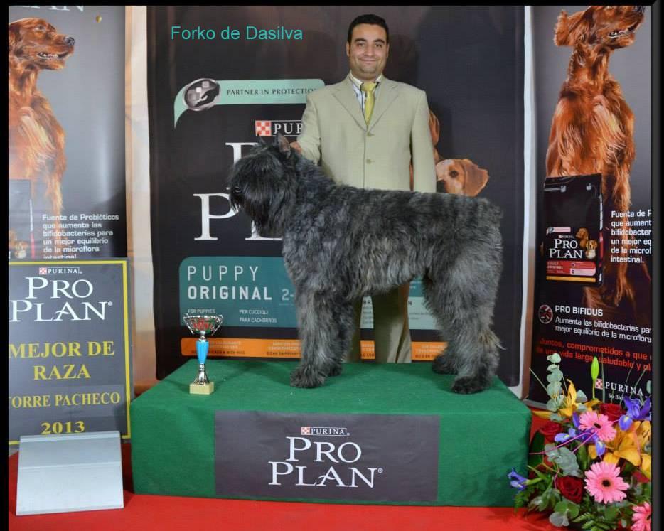 Forcko de Dasilva en la Exposicion de Torrepacheco Murcia