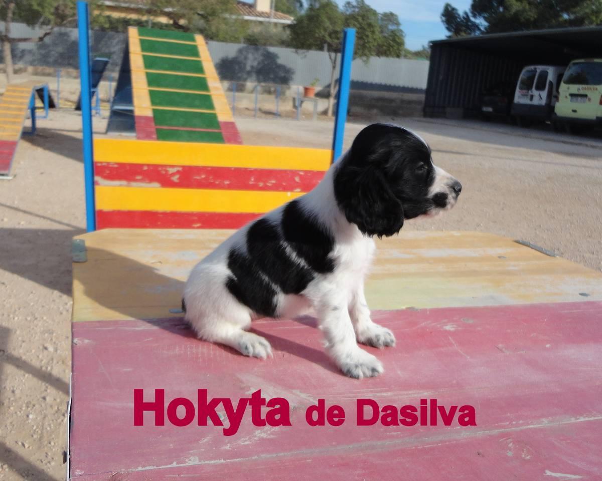 Cachorro de Cocker de perros Dasilva