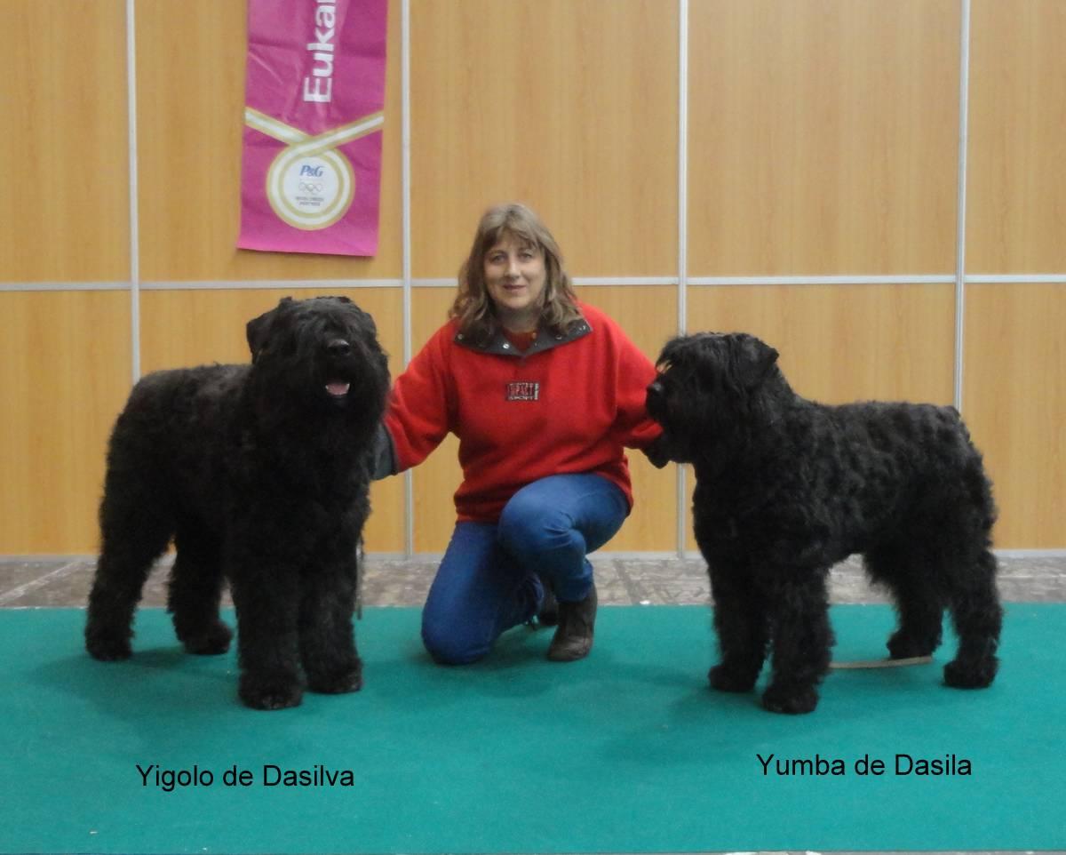 En la Exposición Internacional del Norte concursaron los hermanos Yigoló de Dasilva y Yumba de Dasilva, ella terminó el Campeonato de Belleza de Portugal, él acaba de comenzar.