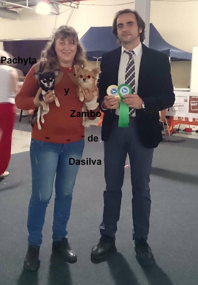Los Chihuahuas de pelo largo, ganadores de las 2  Exposiciones Caninas de Alicante