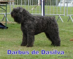 Darbus