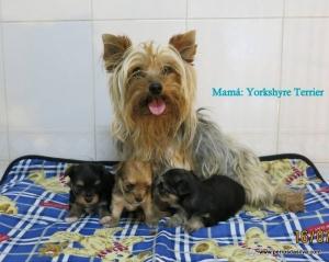 Mama Yorky