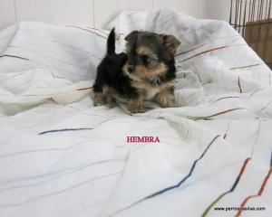 Cachorro Mestizo H2