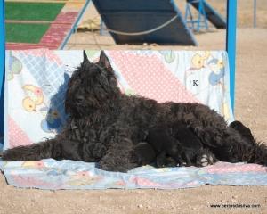Troya Cach (13)